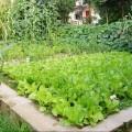 Soil and Water&lt;br&gt;<br /> Conservation &amp;&lt;br&gt;<br /> Rehabilitation<br /> <br /> Soil and water conservation and&lt;br&gt;soil remediation<br /> <br /> Soil and water conservation &amp;&lt;br&gt;soil remediation<br /> <br /> Soil and water&lt;br&gt;Conservation &amp;&lt;br&gt;Remediation